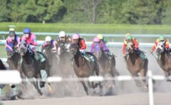 real horse race