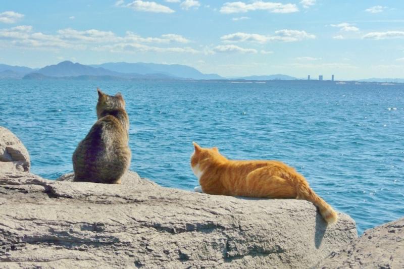 Cat Island series