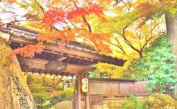 秋月城下町散策と会席料理と大宰府天満宮の旅【F-0024】